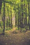 Camino forestal abajo de la colina Fotografía de archivo libre de regalías