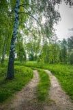 Camino forestal al borde de una arboleda del abedul Imagen de archivo
