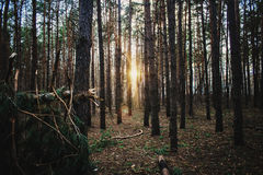 Camino forestal bajo rayos de sol de la puesta del sol Imagen de archivo libre de regalías