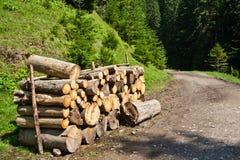 Camino forestal con logpile Foto de archivo libre de regalías