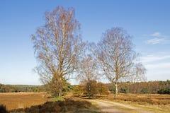 Camino forestal con los abedules en el Loenermark Foto de archivo libre de regalías