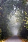 Camino forestal con niebla Fotos de archivo