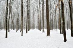 Camino forestal cubierto con nieve en el bosque del invierno Imagen de archivo libre de regalías