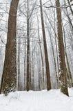 Camino forestal cubierto con nieve en el bosque del invierno Fotos de archivo libres de regalías
