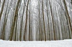 Camino forestal cubierto con nieve en el bosque del invierno Imagen de archivo