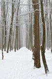 Camino forestal cubierto con nieve en el bosque del invierno Imagenes de archivo