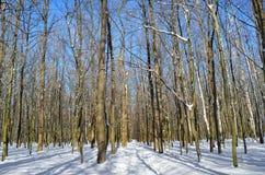 Camino forestal cubierto con nieve en el bosque del invierno Fotografía de archivo libre de regalías