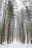 Camino forestal cubierto con nieve en el bosque del invierno Fotos de archivo