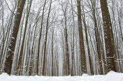 Camino forestal cubierto con nieve en el bosque del invierno Imágenes de archivo libres de regalías