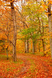 Camino forestal de la caída fotografía de archivo libre de regalías