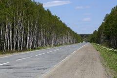Camino forestal del abedul blanco Imágenes de archivo libres de regalías