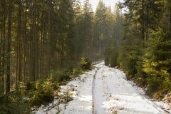 Camino forestal del invierno imagen de archivo libre de regalías