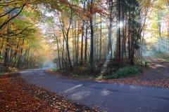 Camino forestal del otoño en las maderas foto de archivo