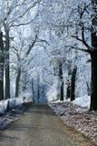 Camino forestal del paisaje del invierno con los árboles del hielo Fotografía de archivo libre de regalías