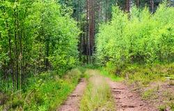 Camino forestal del resorte Imagen de archivo libre de regalías