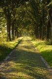 Camino forestal del verano Fotografía de archivo