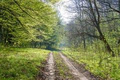 Camino forestal en el centro del buen día del bosque de verano foto de archivo