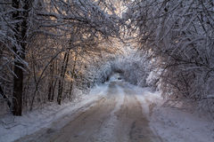 Camino forestal en el invierno Fotografía de archivo libre de regalías