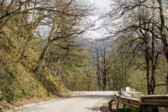 Camino forestal en el Mak de la KOH Imagenes de archivo