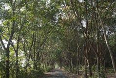 Camino forestal en el Mak de la KOH Fotos de archivo
