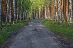 Camino forestal en el Mak de la KOH Fotos de archivo libres de regalías
