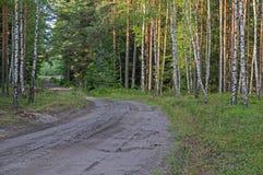 Camino forestal en el Mak de la KOH Imágenes de archivo libres de regalías