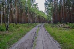 Camino forestal en el Mak de la KOH Foto de archivo