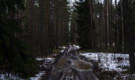 Camino forestal en el Mak de la KOH Imagen de archivo libre de regalías