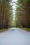 Camino forestal en el Mak de la KOH foto de archivo libre de regalías