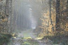 Camino forestal en el paisaje del invierno Fotos de archivo