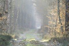 Camino forestal en el paisaje del invierno Foto de archivo libre de regalías