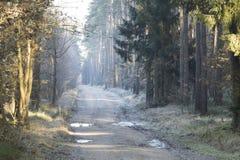 Camino forestal en el paisaje del invierno Imagen de archivo libre de regalías