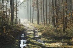 Camino forestal en el paisaje del invierno Imagenes de archivo