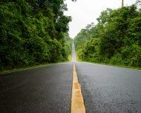Camino forestal en el parque nacional de Khaoyai (el patrimonio mundial del natu foto de archivo libre de regalías