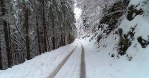 Camino forestal en invierno con nieve almacen de metraje de vídeo