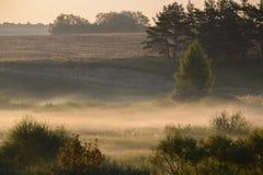 Camino forestal en la niebla de la mañana Fotos de archivo