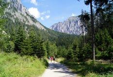 Camino forestal en mounteins del alpin Imagen de archivo libre de regalías