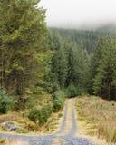 Camino forestal en niebla Fotos de archivo