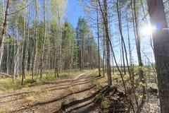 Camino forestal en otoño temprano Sun brillante en el marco fulgor foto de archivo libre de regalías