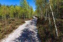 Camino forestal en Polonia Imagen de archivo