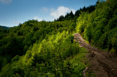 Camino forestal en primavera Imágenes de archivo libres de regalías