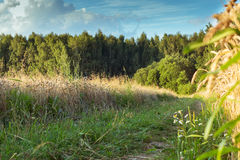 Camino forestal en un día de verano claro Imagen de archivo
