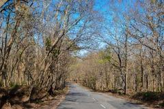 Camino forestal en un día soleado del otoño Fotos de archivo