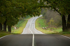 Camino forestal en verano Foto de archivo libre de regalías