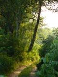 Camino forestal fabuloso Imágenes de archivo libres de regalías