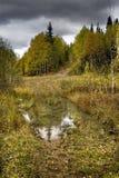 Camino forestal fangoso Fotografía de archivo