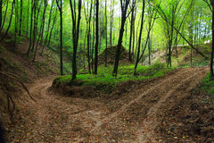 Camino forestal fangoso en otoño en barranco Imagenes de archivo