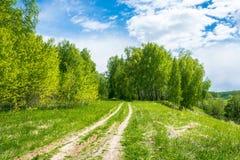 Camino forestal a la arboleda del abedul Foto de archivo