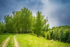 Camino forestal a la arboleda del abedul Imagen de archivo
