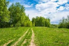 Camino forestal a la arboleda del abedul Fotografía de archivo libre de regalías